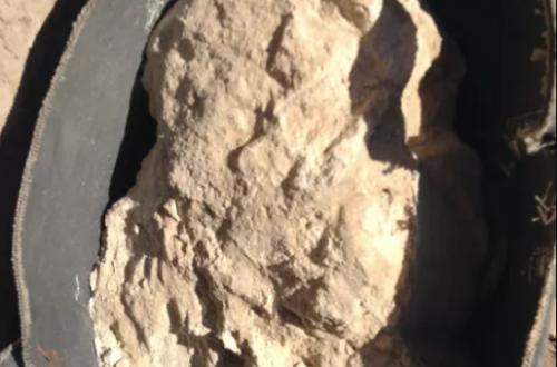 Самый древний в мире сыр, обнаруженный в древней гробнице, оказался смертельно опасен