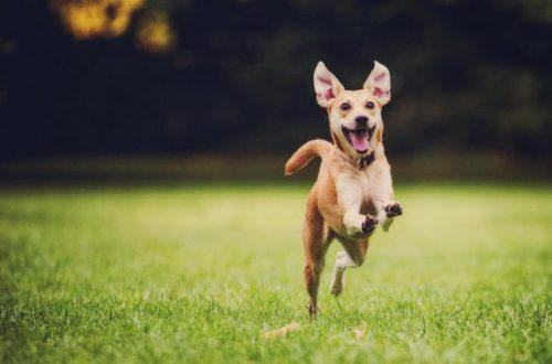 Что чувствуют собаки? Умеют ли они переживать на самом деле?