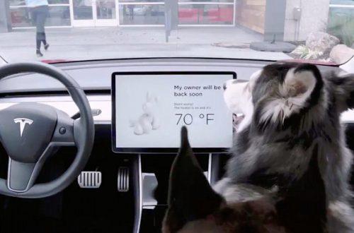 По просьбам пользователей: Tesla добавила своим автомобилям «Собачий режим»