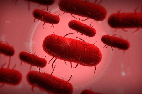Играть в Plague Inc. станет проще - в ней появятся антивакцинаторы