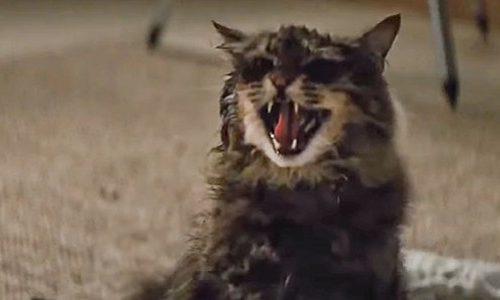 Есть ли сцена после титров «Кладбище домашних животных» (2019)?