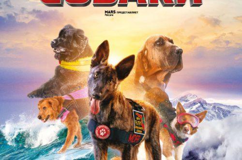 Корпорация IMAX покажет документальный фильм о собаках-спасателях в формате IMAX® 3D