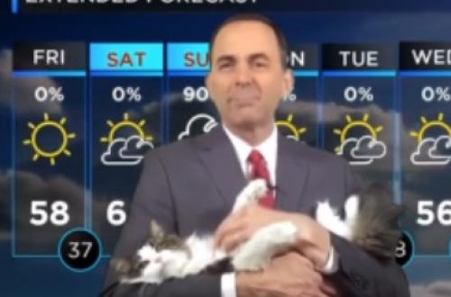 Американский синоптик ведёт прогноз погоды со своей кошкой