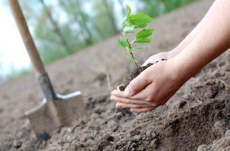 Экология в саду
